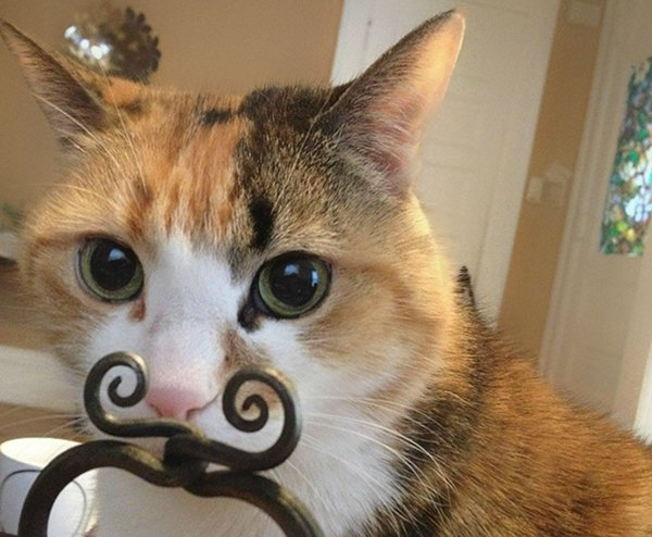 perfectly-timed-cat-moustache