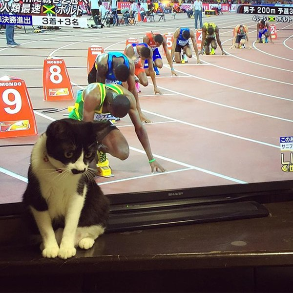 perfectly-timed-cat-race