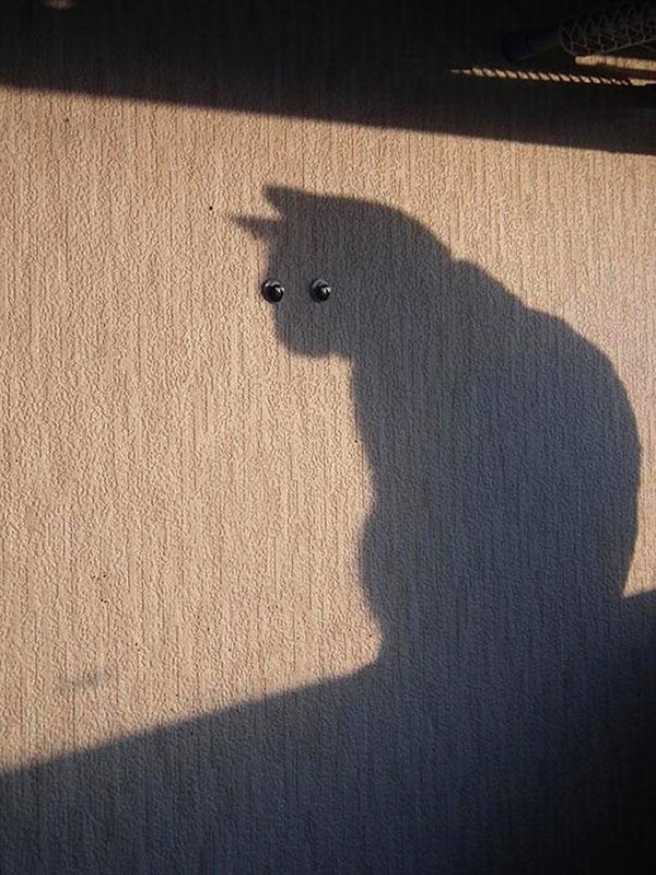 perfectly-timed-cat-screws