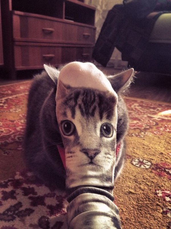 perfectly-timed-cat-sock