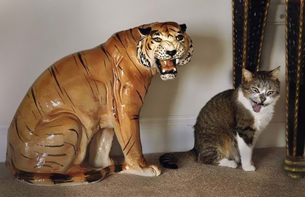 perfectly-timed-cat-tiger