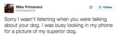 strange-things-dog-owners-best