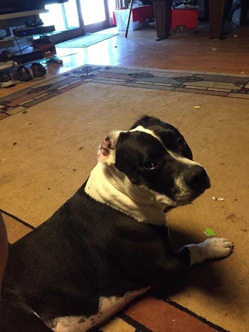 strange-things-dog-owners-ears