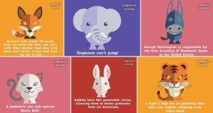 Animal Facts Cute Illustrations