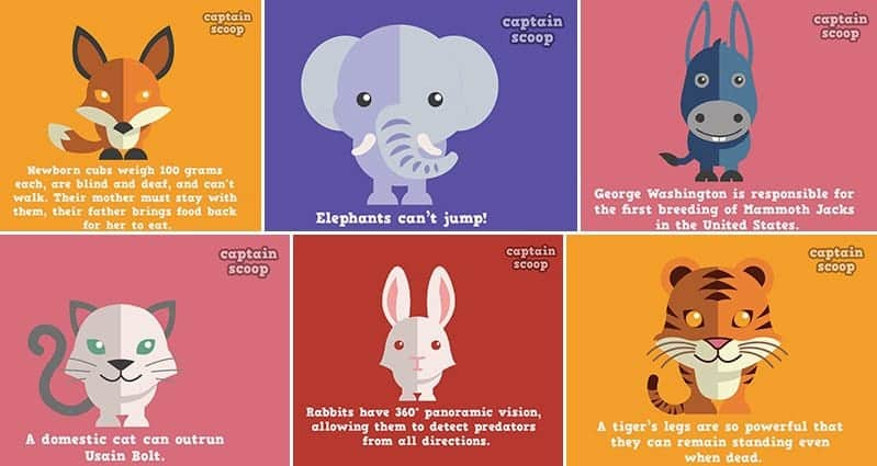 15 Interesting Animals Facts Paired With Cute Illustrations