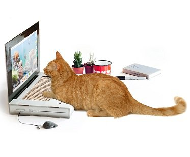 Cat Laptop Scratch Pad and mouse