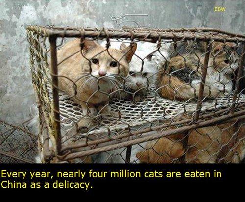 Cats Eaten