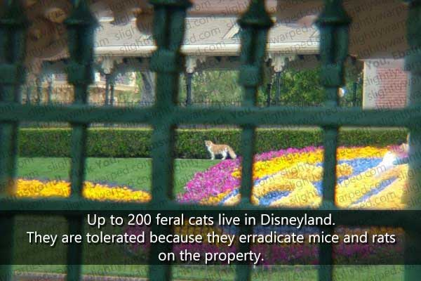 16 fun things about disneyland you never knew part 1