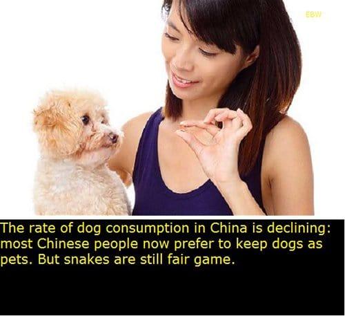 Dog Consumption