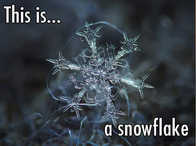close-up-of-snowflake