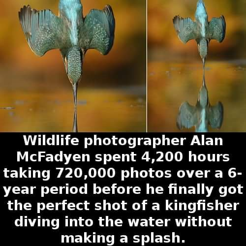 cool-facts-kingfisher