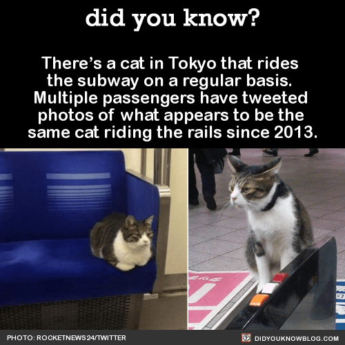funny-facts-cat