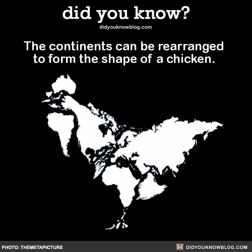 funny-facts-chicken