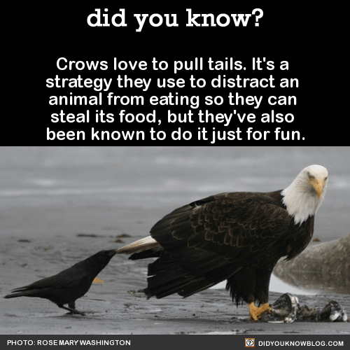 funny-facts-tail