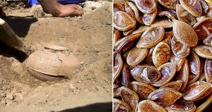 Archeologists Discovery Clay Pot Seeds