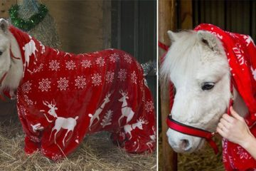 Festive Foursie Ponies Winter