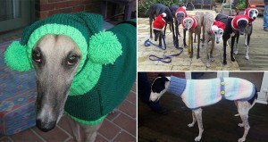 Sweaters For Greyhounds