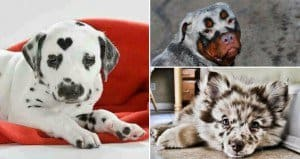 dogs with amazing markings