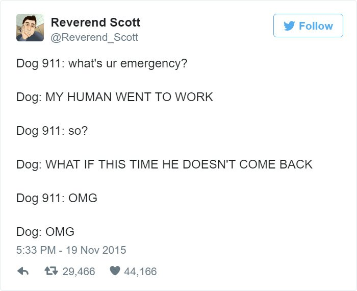 funny-dog-emergency-calls-work
