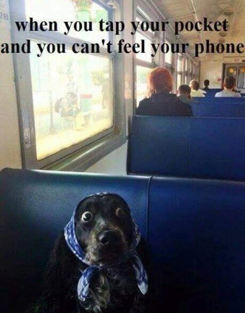 Funny Images That Dog Lovers Will Adore