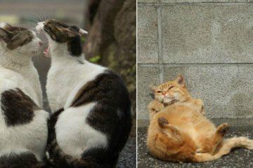 tokyo stray cats
