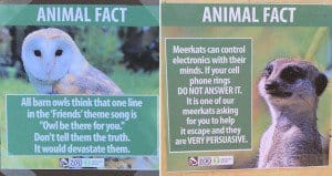 Animal Facts Los Angeles Zoo
