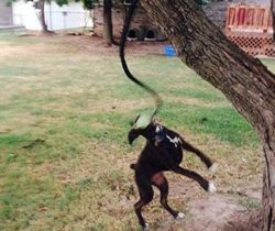 Bungee Rope Dog Toy