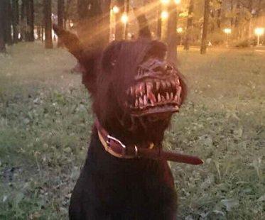 Werewolf Dog Muzzle For Sale