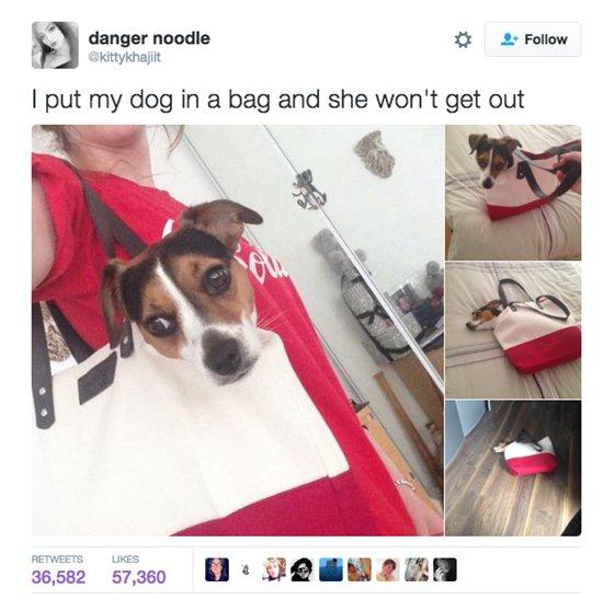 dogs-bag