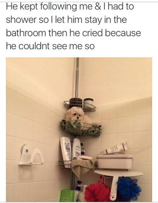 dogs-bathroom
