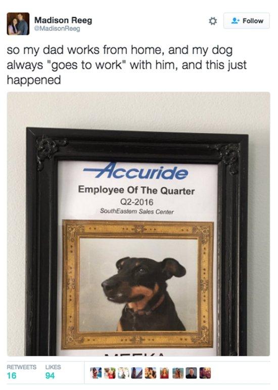 dogs-employee