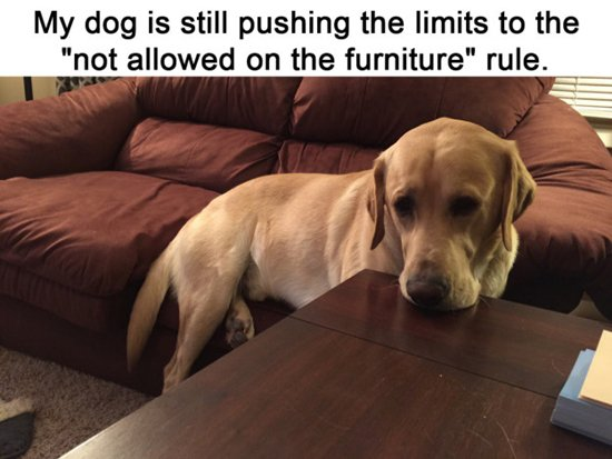 dogs-furniture