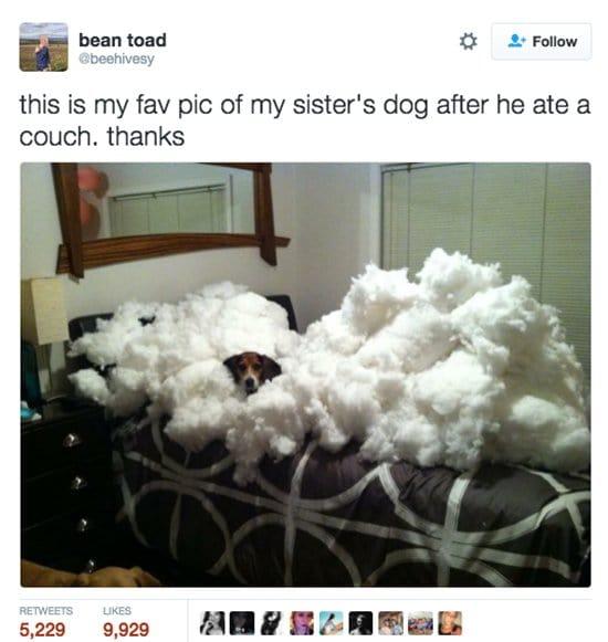 dogs-nom