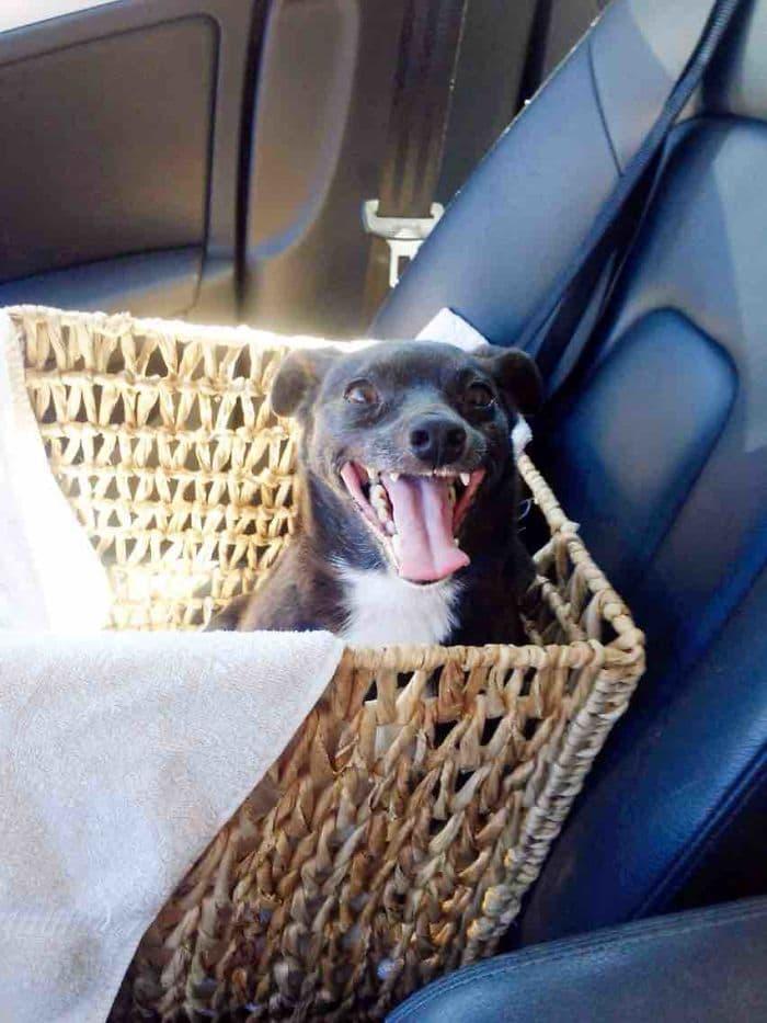 dogs-on-adoption-day-basket
