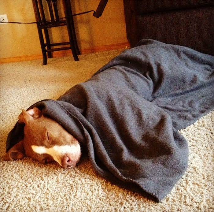 dogs-on-adoption-day-blanket