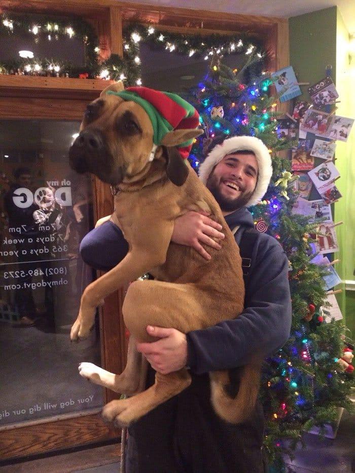 dogs-on-adoption-day-christmas