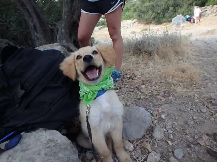 dogs-on-adoption-day-crete