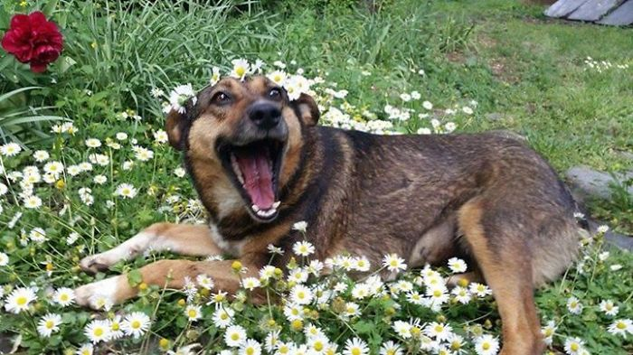 dogs-on-adoption-day-daisies