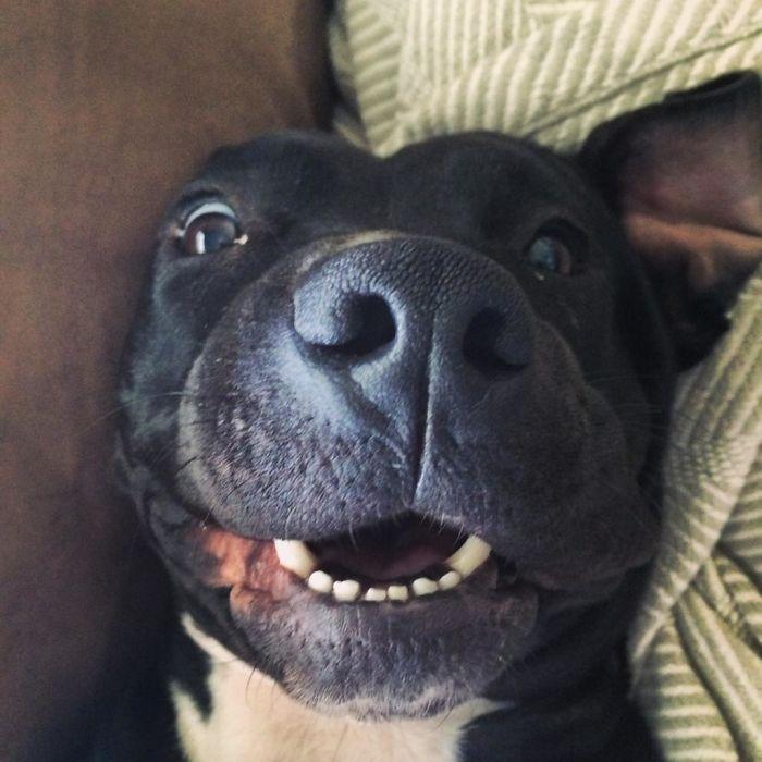 dogs-on-adoption-day-street