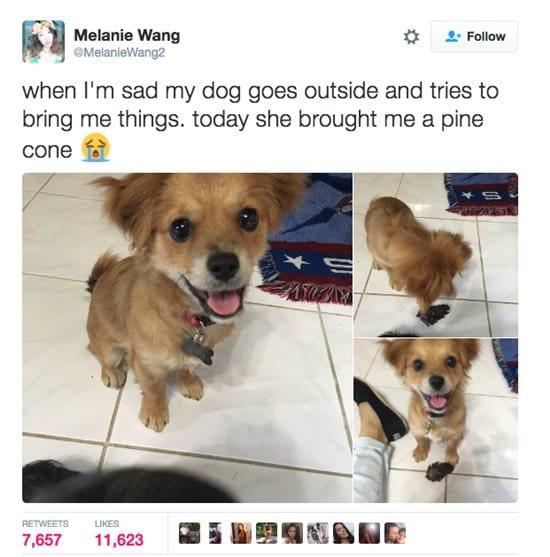 dogs-sad