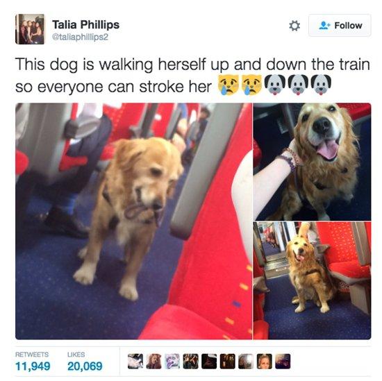 dogs-train