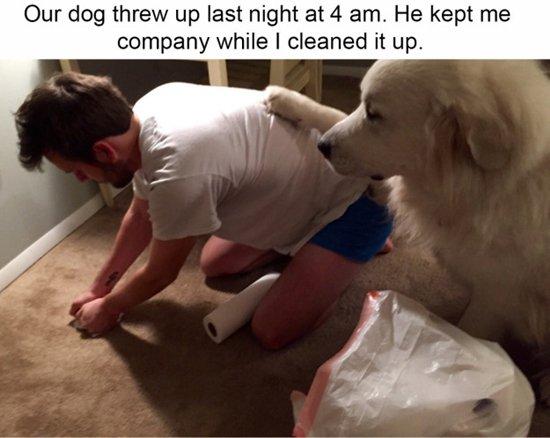 dogs-vom