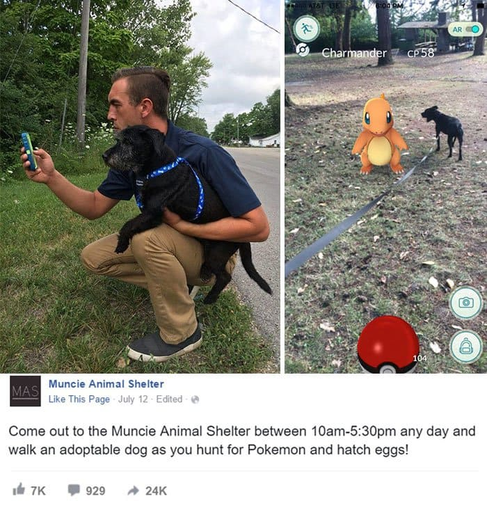 making-the-most-pokemon-go-dogs