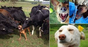 pets having the best day
