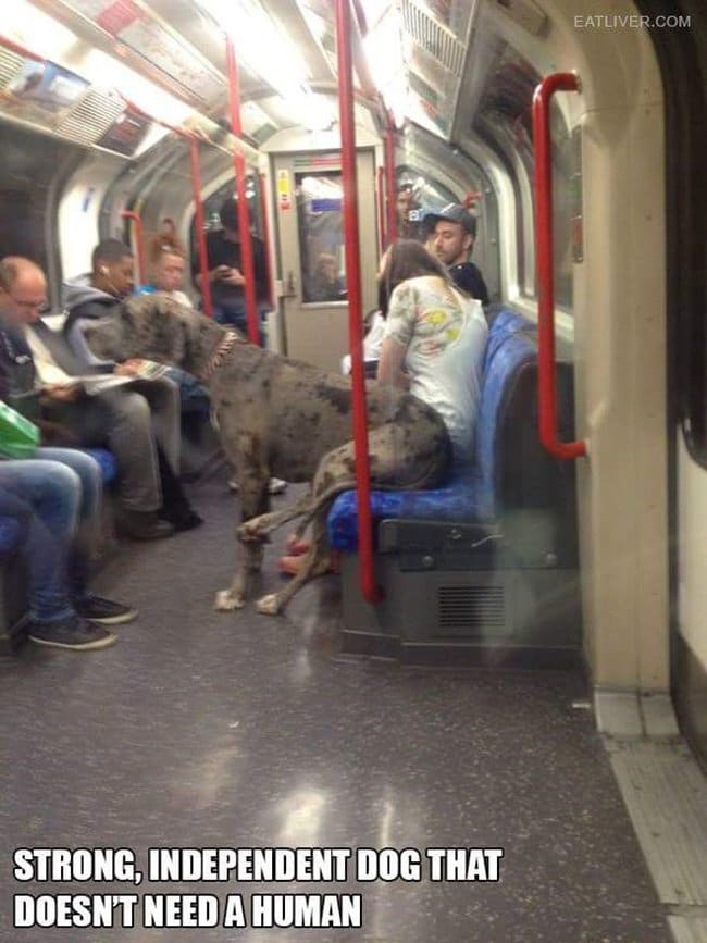 public-transport-crazies-great-dane