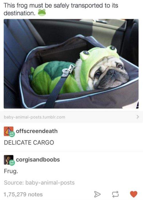 tumblr-stuff-frug