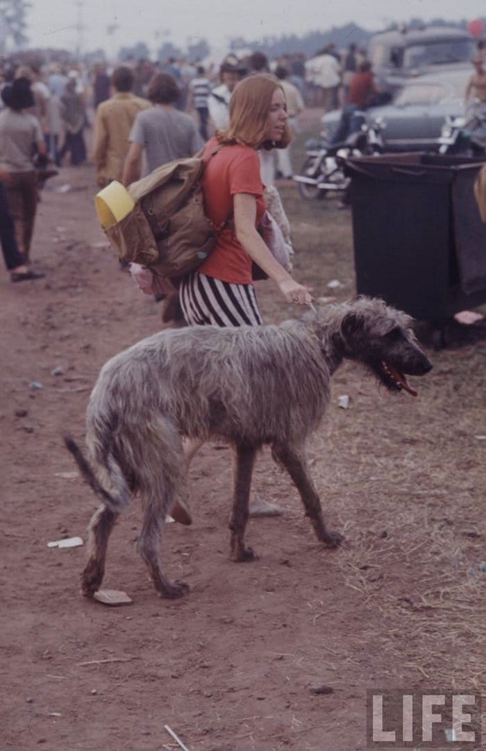 1969-woodstock-music-festival-dog