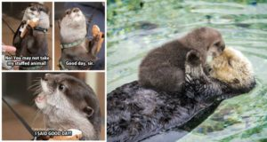 adorable otters