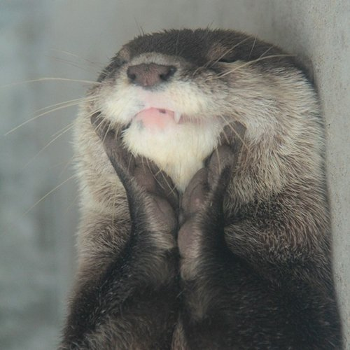 adorable-otters-paws