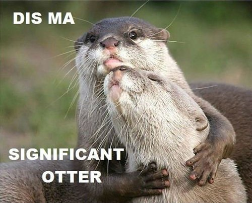 adorable-otters-so